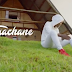 NEW SONG |  LAVALAVA - TUACHANE ( OFFICIAL VIDEO ) | DOWNLOAD Mp4 VIDEO