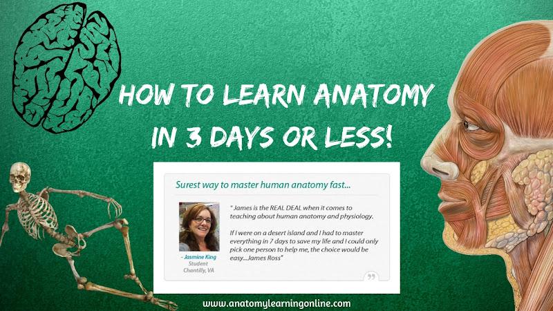 Learn Anatomy Physiology - Google+