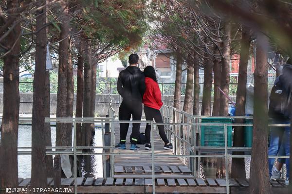 台中西屯|中科落羽松|廣福社區落羽松秘境|水上木棧道|水陸兩區拍美照