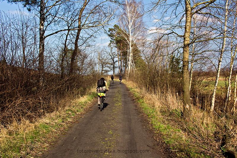 lasy,rowerem,Mielec,puszcza sandomierska
