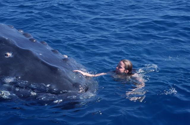 Cô gái đại dương (Ocean Girl)