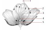 Soal Kingdom Plantae Dan Jawabannya