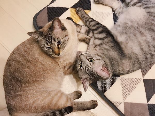お膝の順番待ちをしている猫たち「ぼくたちの番まだぁ?」