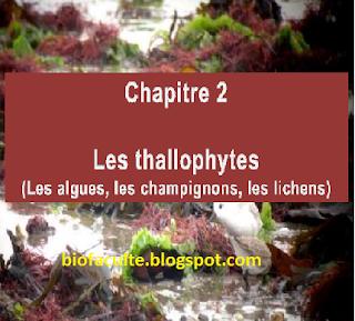 http://biofaculte.blogspot.com/2014/12/thallophytes-algueschampignonslichens.html