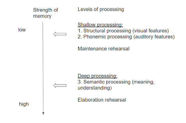 the levels of processing model Introducing the levels of processing theory traditional theories of memory segmented human memory into different stores - for example, the multi-store model with sensory, short-term and long-term stores.