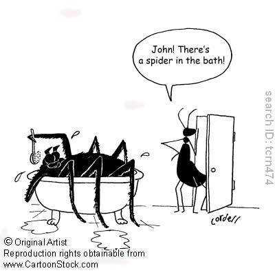 spider-caricature