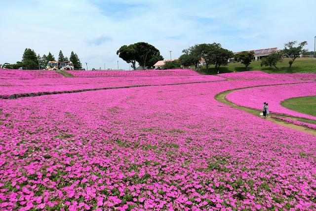 Futtsu-shi, Chiba: Mother Farm
