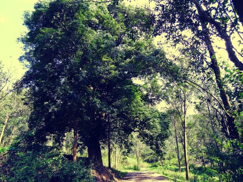 beautiful Kerala countryside with lush greenery