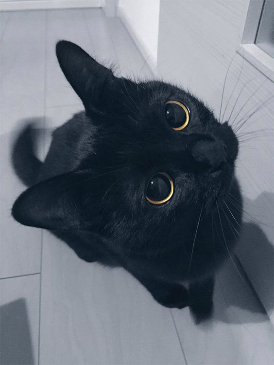 Cute Black Cat Wallpaper for Whatsapp