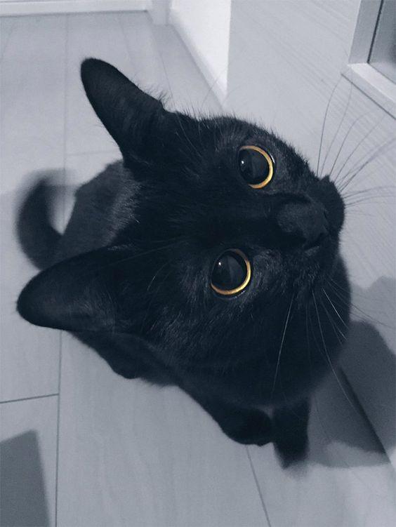 Cute Black Cat Wallpaper for Whatsapp