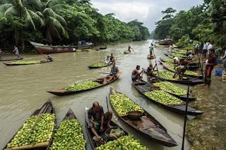 Mercado de Goiaba Silvestre Flutuante em Bangladesh