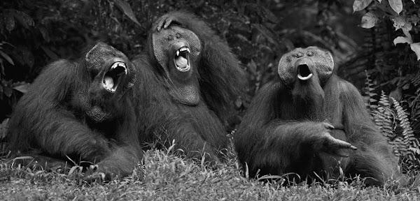Γελάνε Και Οι… Αριστερές Μαϊμούδες