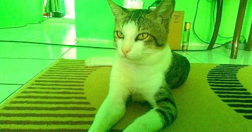 Pengalaman Bawa Kucing Naik Pesawat