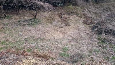 整備着手前の谷津の耕作地