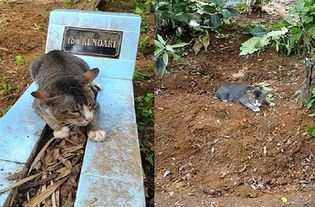 al-kisah-kucing-yang-terlalu-merindui-tuannya