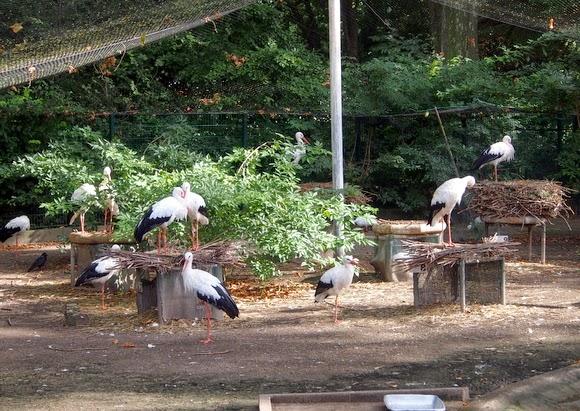 Strasbourg zoo