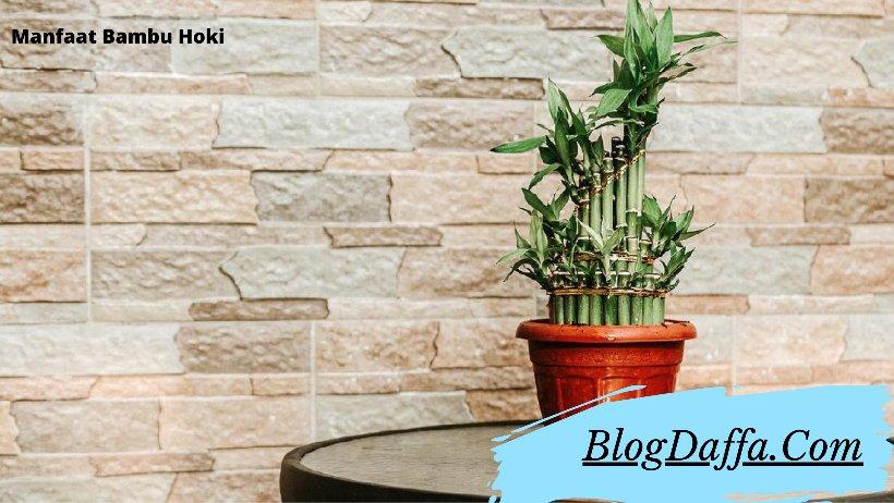 Manfaat bambu hoki di rumah