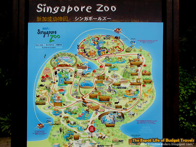 bowdywanders.com Singapore Travel Blog Philippines Photo :: Singapore :: Singapore Zoo - The World's Best Rainforest Zoo