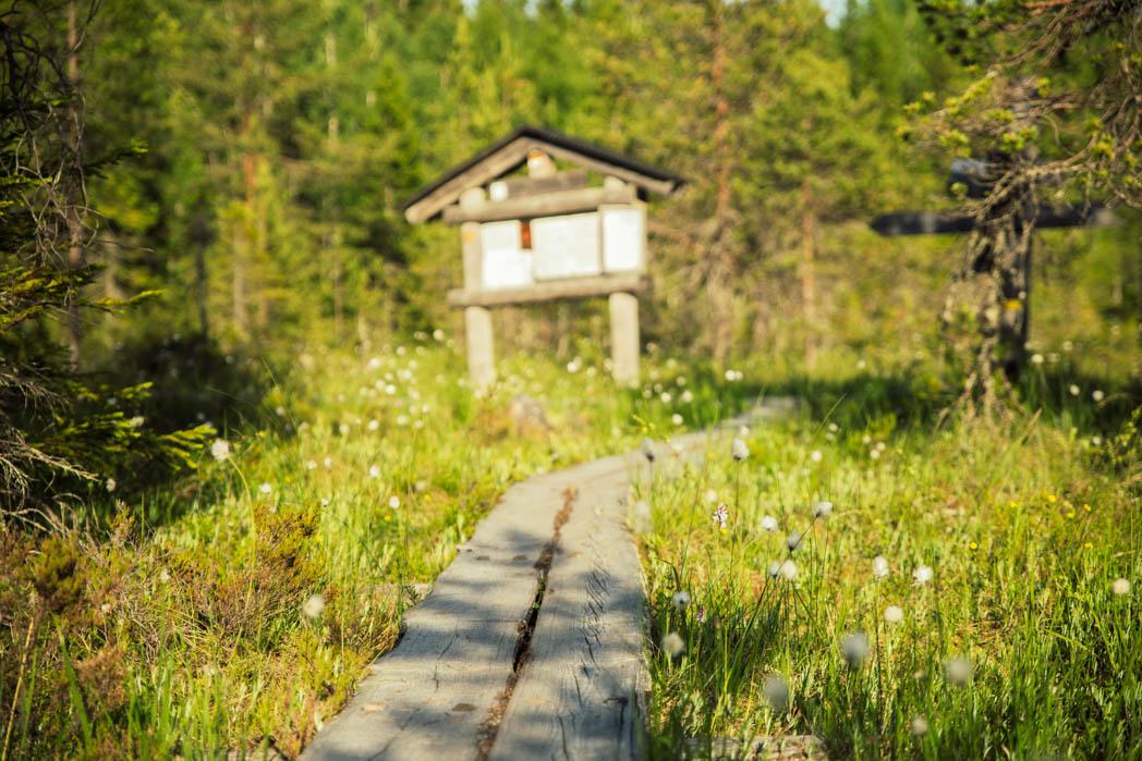Kolin kansallispuiston Herajärven kierros tarjoili paljon kinttupolkuja, mutta välillä sai nauttia myös pitkospuiden helppoudesta.