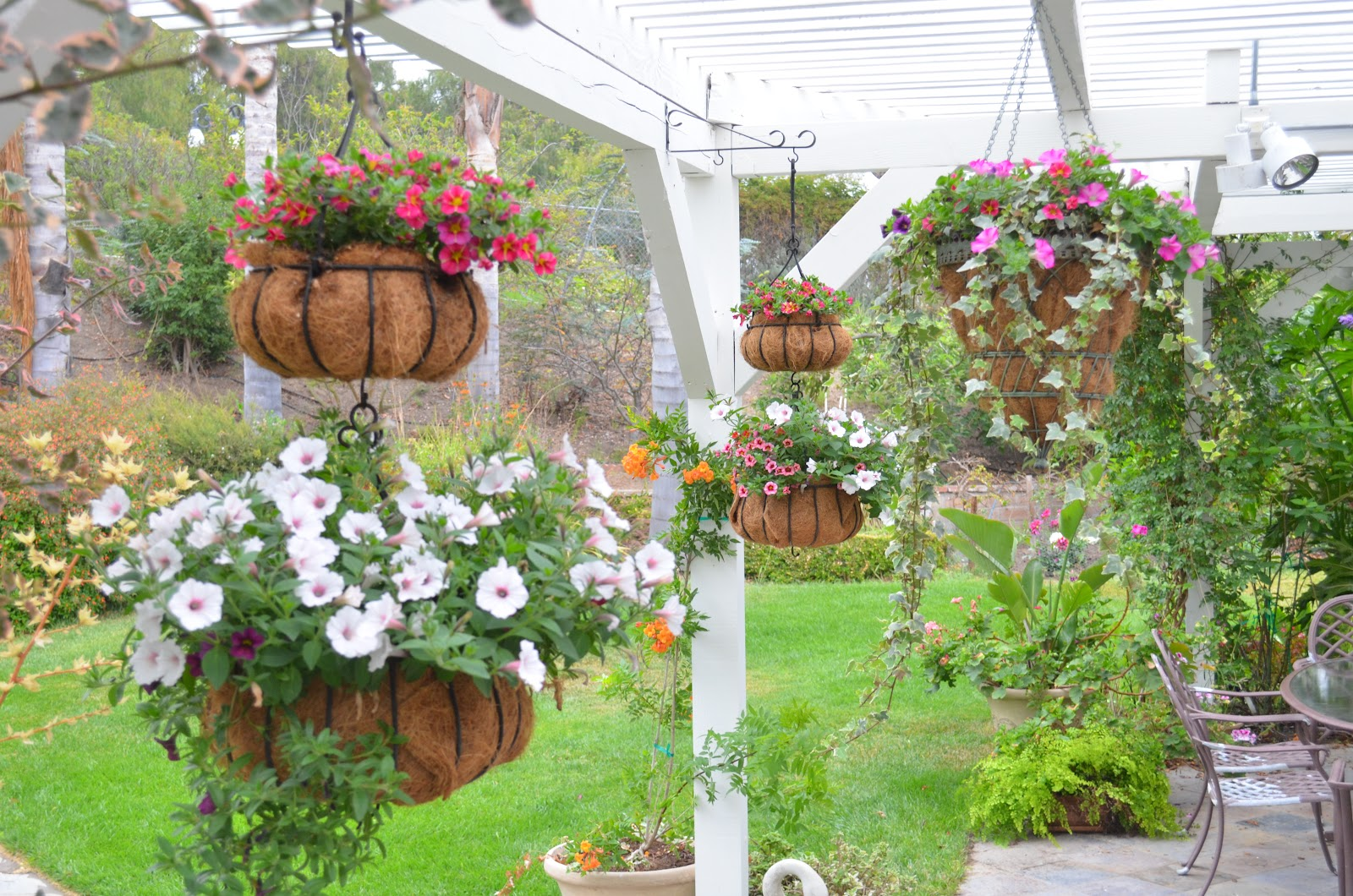 Entertaining from an ethnic indian kitchen hanging baskets for Arboles con flores para jardin