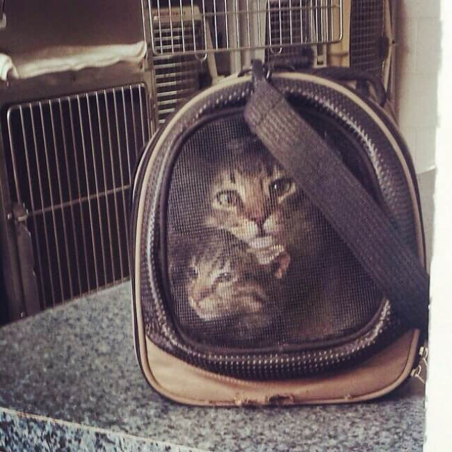 These 25 Highly Confusing Images Made Us Think Twice - 'Our two cats look like they were cross-stitched onto the carrier.'