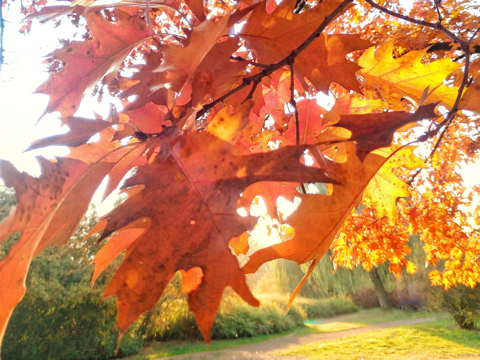 Jesień, którą pokochałam. 1-14 października