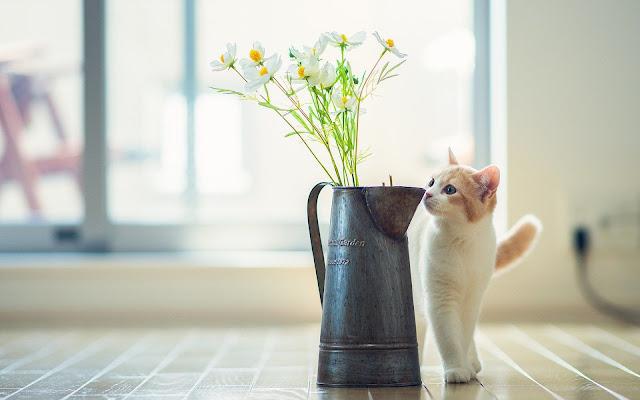 Kat en vaas met bloemen