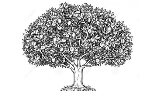 psikotes gambar pohon apel