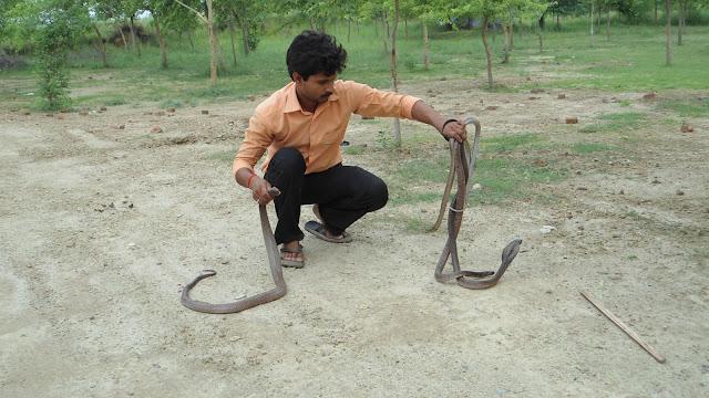खतरों के खिलाड़ी मुरारी बाबू (Murari Babu- A Snake Charmer)