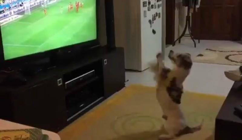 Σκυλάκι πανηγυρίζει το γκολ της ομάδας του! (βίντεο)