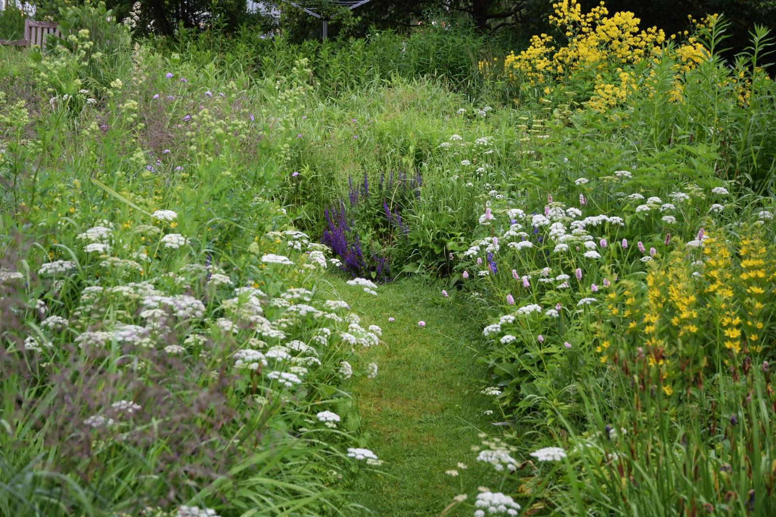 Wunderschön Alternative Zu Rasen Das Beste Von Dass Es Eine Zum Geschorenen Und Pflegeintensiven