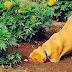Ηλικιωμένος έδωσε και χτύπησε μέχρι θανάτου σκύλο σε χωριό του Έβρου