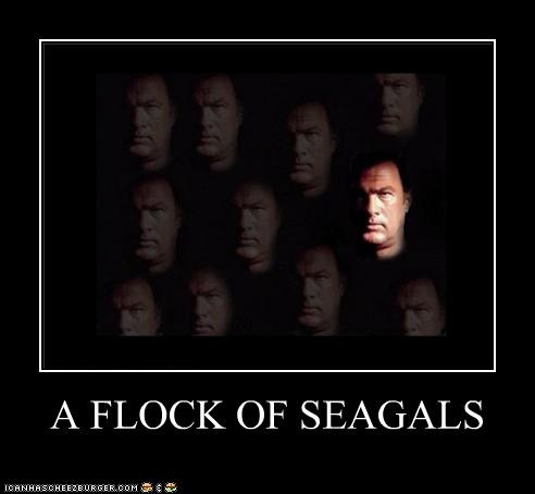A Flock of Seagals