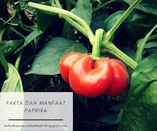efek samping mengonsumsi paprika