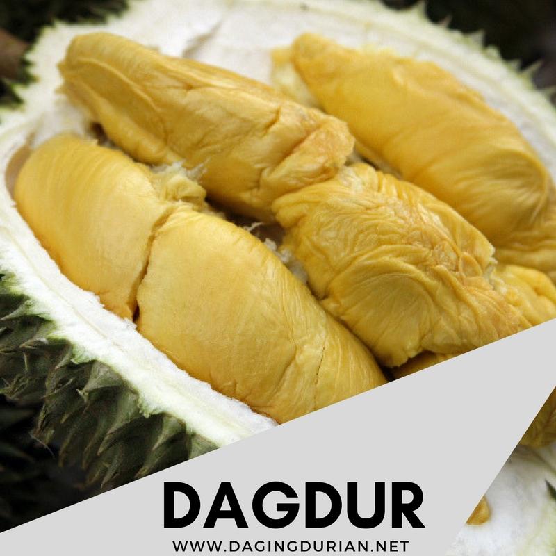 beli-disini-daging-durian-medan-beku-di-kigamani