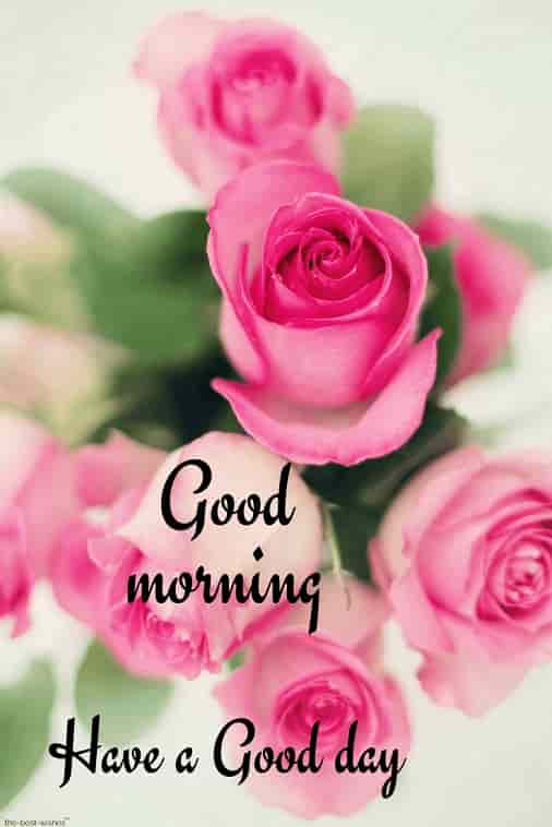 good morning hd picture with pink roses