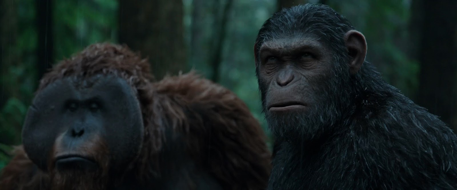 El Planeta de los Simios: La Guerra (2017) 1080p Latino - Ingles captura 1
