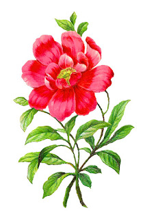 flower camellia image artwork botanical illustration clipart digital