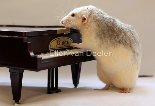 02-The-Piano-Player-Musical-Dumbo-Rat-Ellen-Van-Deelen-www-designstack-co