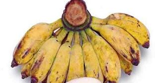 manfaat pisang kepok