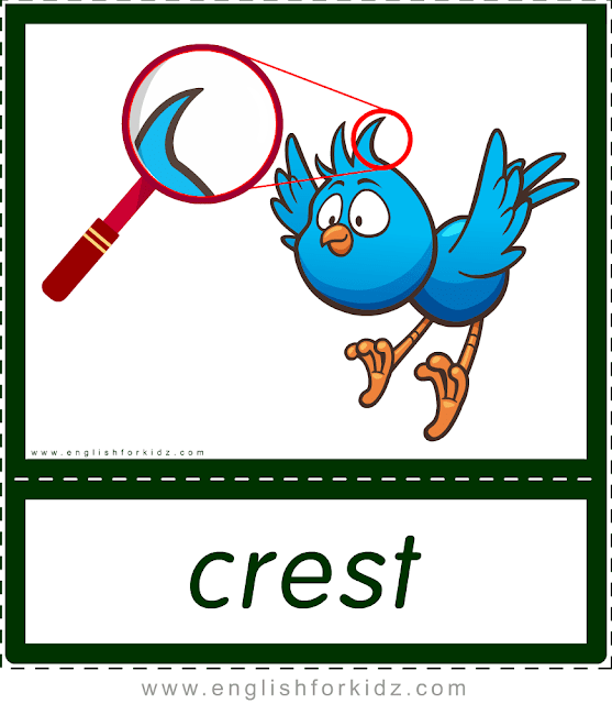 Crest (bird) - printable animal body parts flashcards for English learners