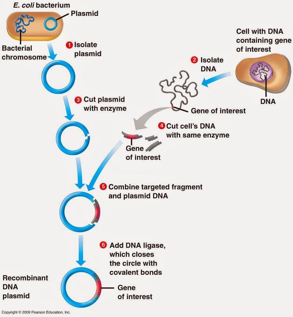 Molecular cloning