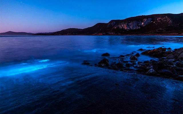 bioluminescent