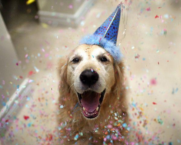 Un perro y fiesta de cumpleaños