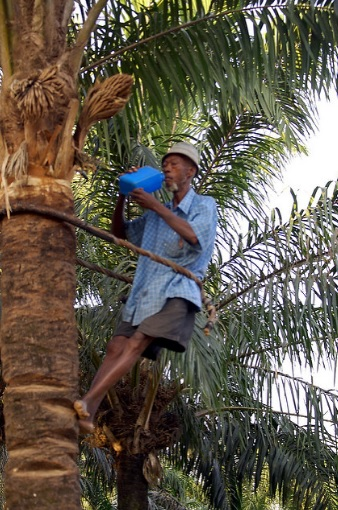 Palm Wine Tapper
