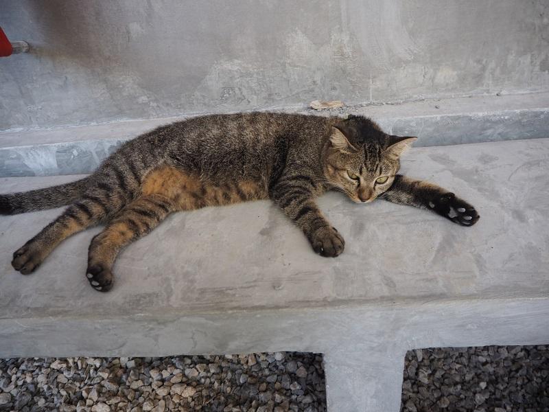 Kitty City Lanta Animal Welfare