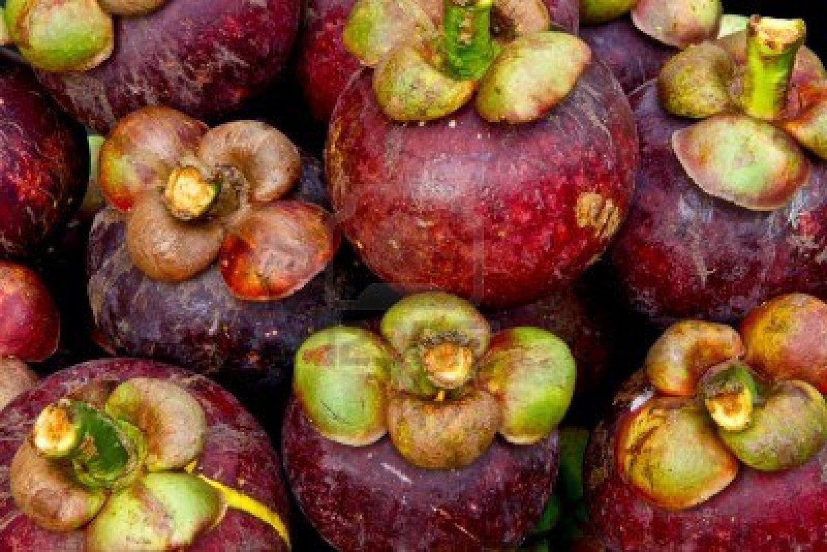 El jard n de judith el mangost n la reina de las frutas - Frutas tropicales y exoticas ...