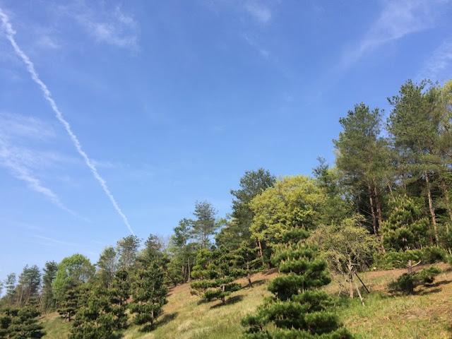 イメージ画像:緑の木々