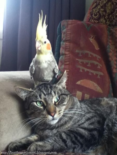 Funny cat and parrot
