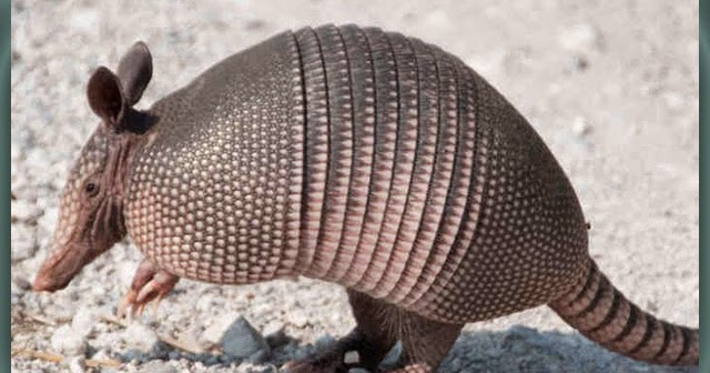 Daftar Nama Binatang Insektivora  Nama Gambar Binatang AZ